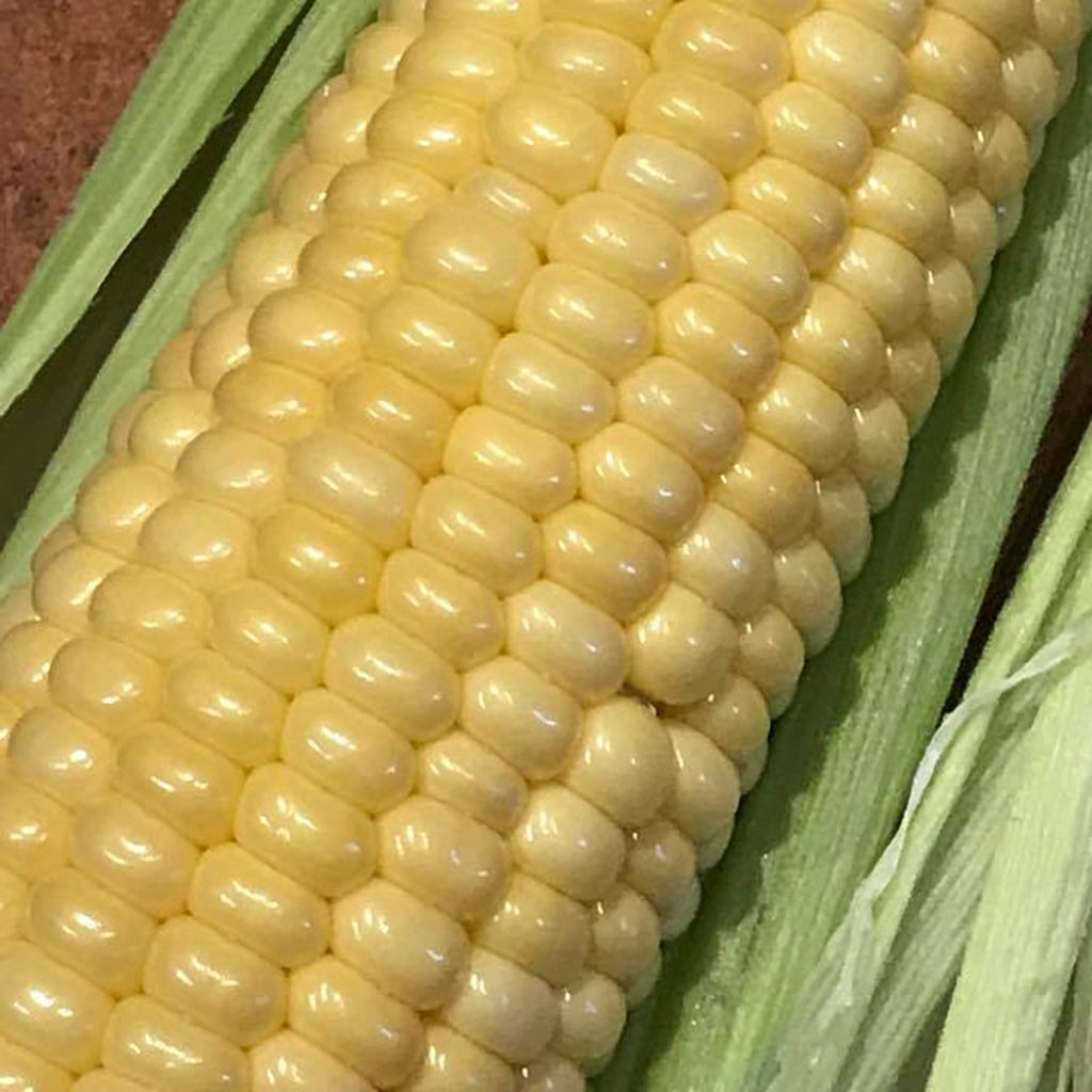img for Sweet Corn