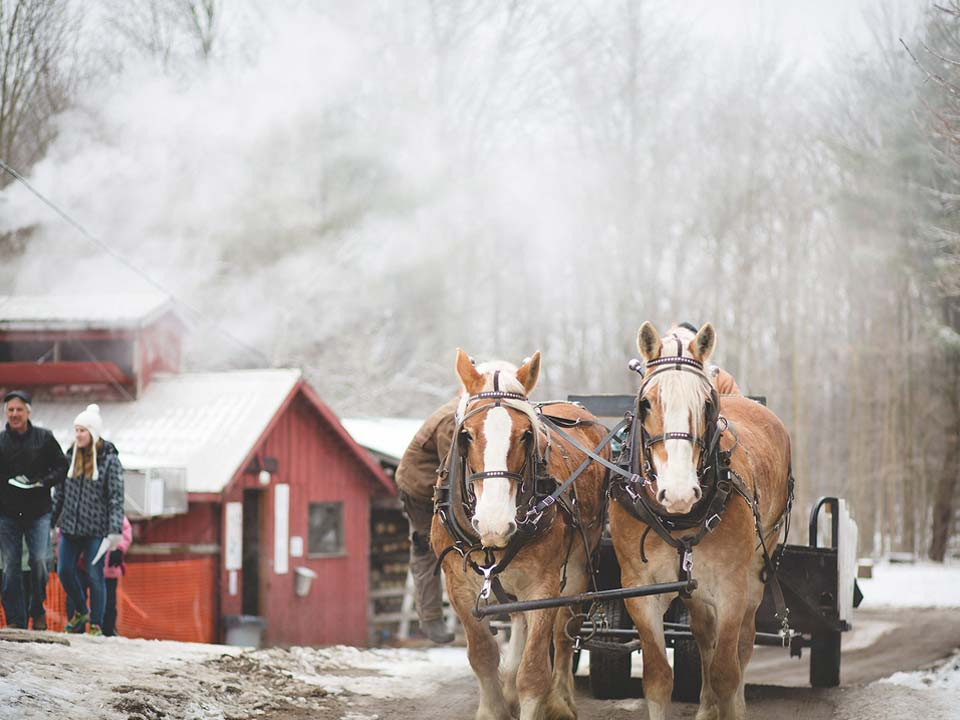 horses with carriage