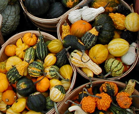 img for Gourds
